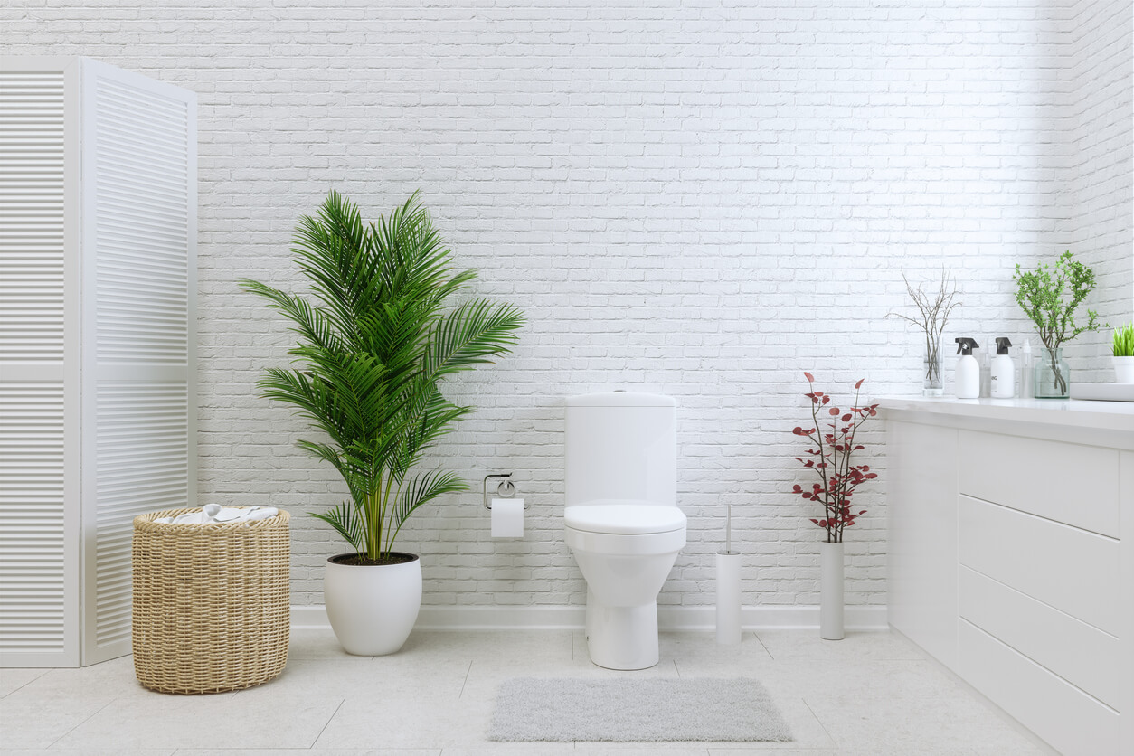 White Toilet Bowl In A Bathroom with plants.